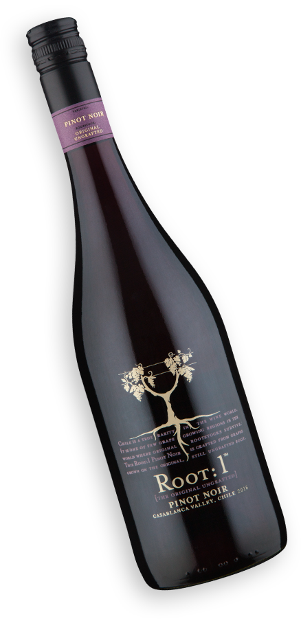 Root: 1 Casablanca Valley Pinot Noir 2016