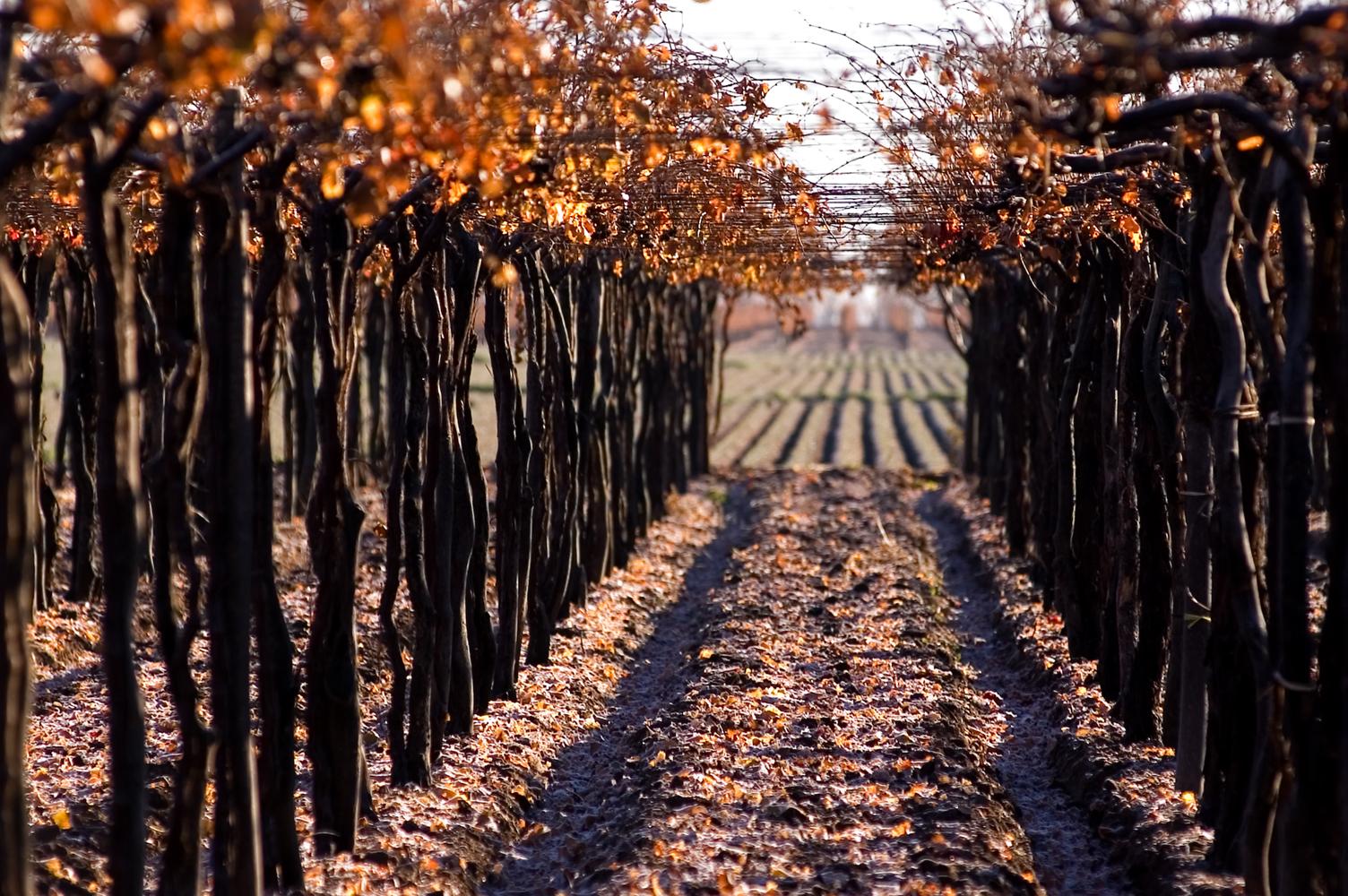 Las Perdices | Winepedia