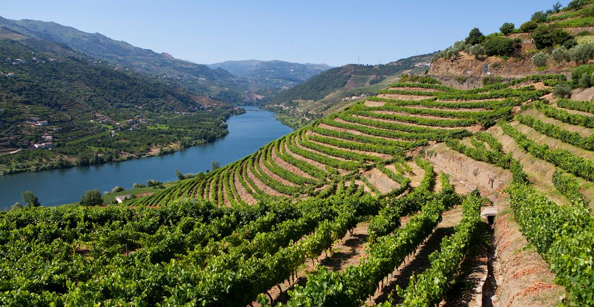 O Que é Denominação de Origem para Vinhos? - Winepedia