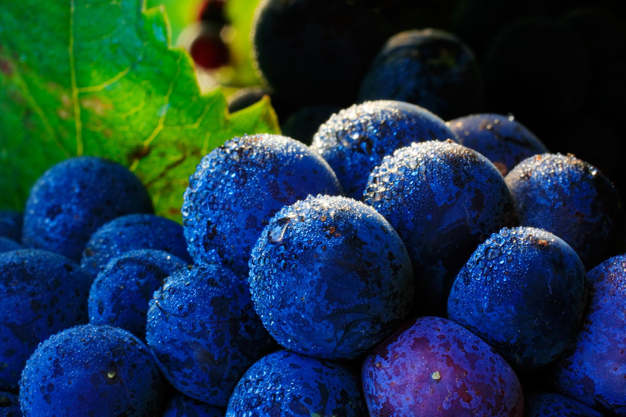 Série Uvas: Pinot Noir | Winepedia