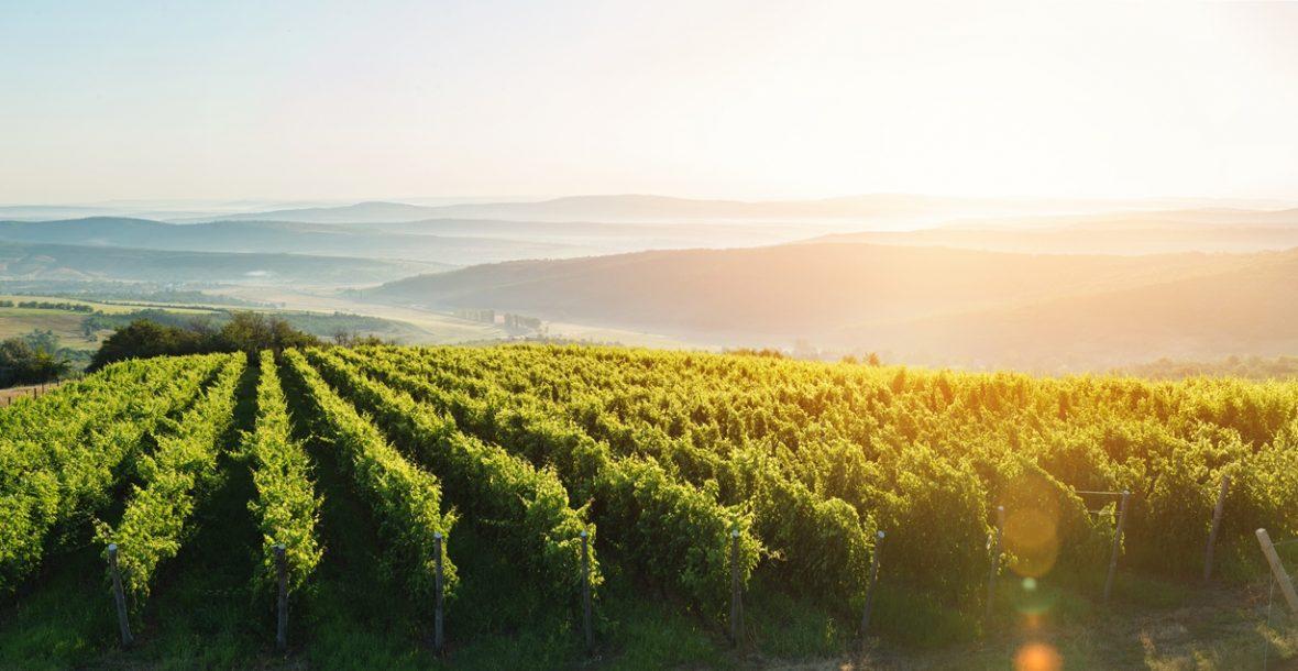 Winepedia - O seu Portal de Conteúdo sobre Vinho